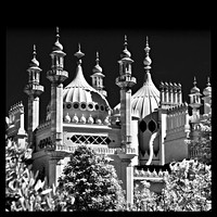 Brighton pavilion  collection (9 of 134)