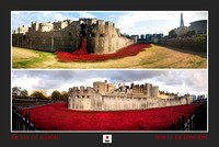 The Tower of London Poppies -