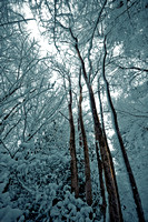 Sussex snow scenes_Leith Hill 1
