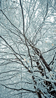 Sussex snow scenes_Leith Hill 3