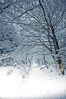 Sussex snow scenes_Leith Hill 2