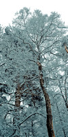 Sussex snow scenes_Leith Hill 5