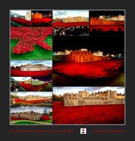 RWCS Tower of London Blood Swept Fields