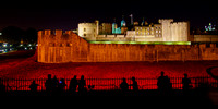 The Tower of London Poppies -3799