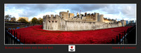 1st Nov 2014 The Tower of London Poppies